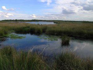 1280px-Netherlands_Grote_Peel_lake